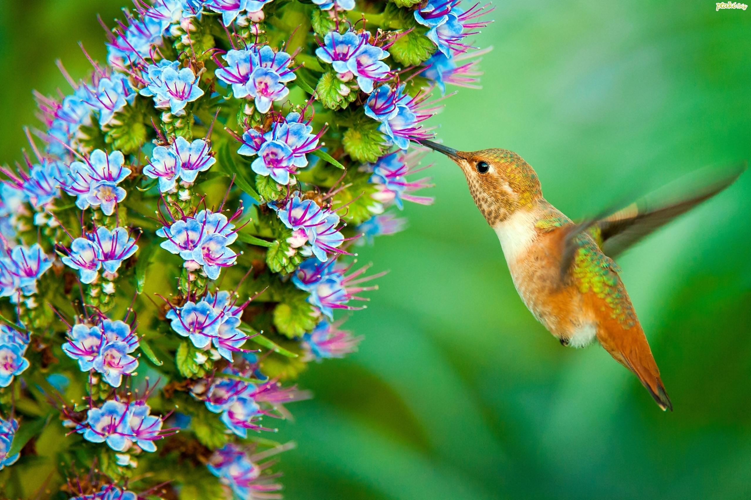Znalezione obrazy dla zapytania kwiatki