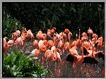 Flamingi, Staw, ZOO